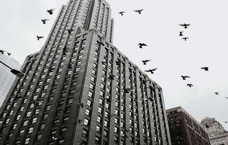 Bird Safe Glass Legislation in North America