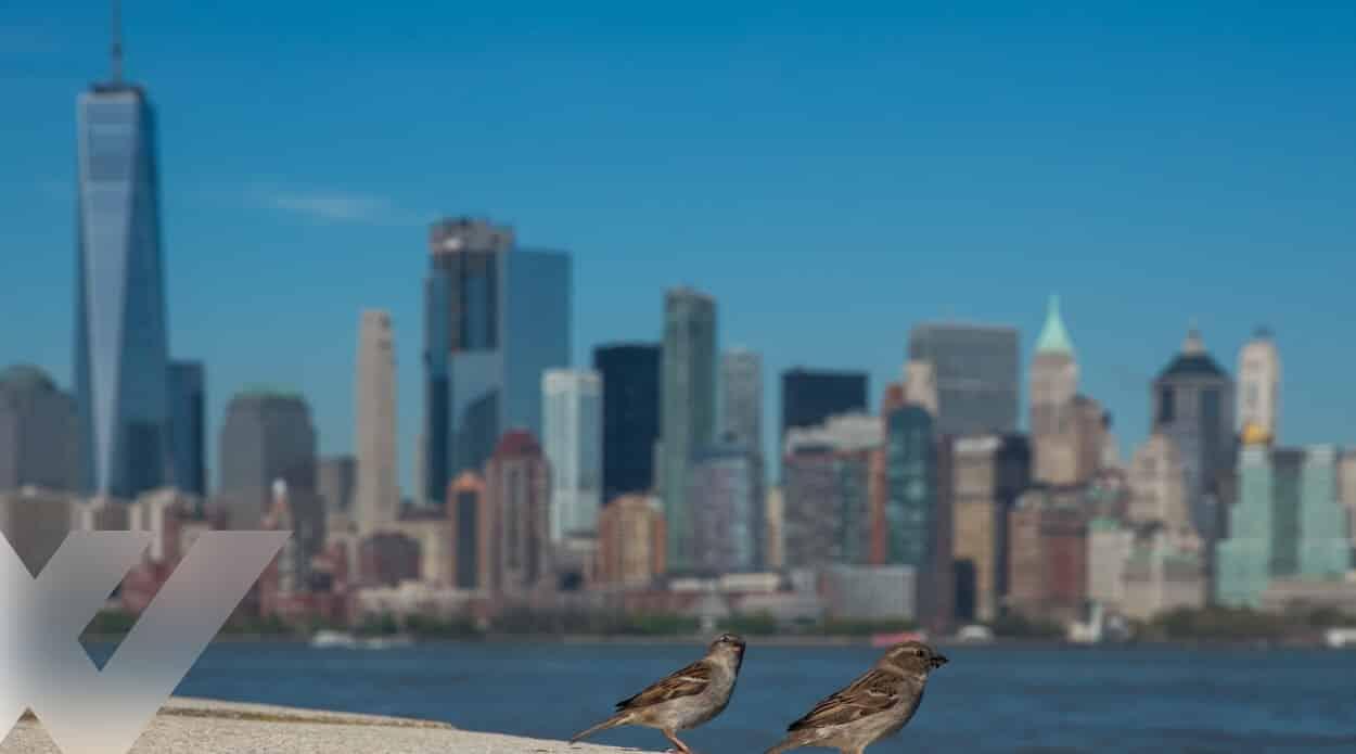 Bird Safe Glass Explained: The Legislation