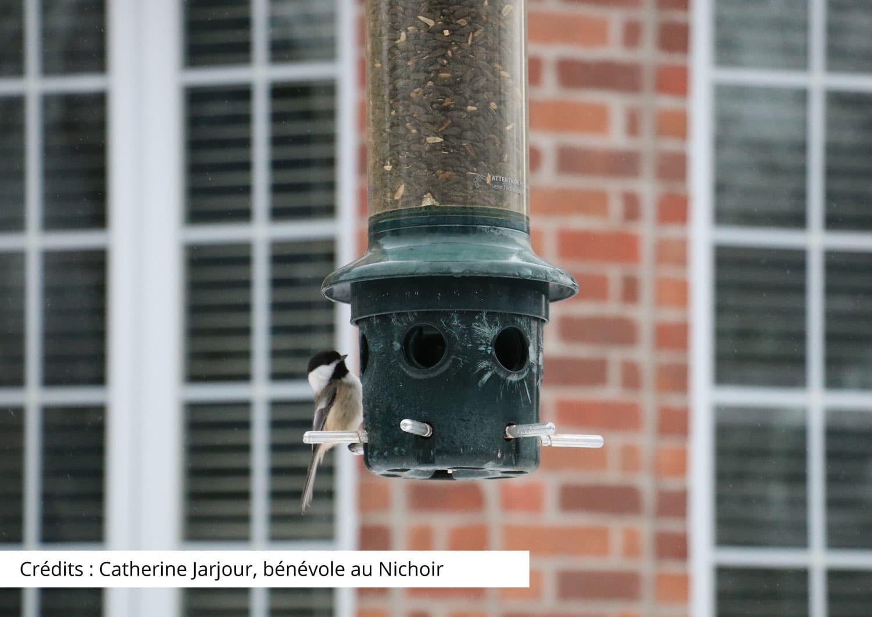 Les collisions d'oiseaux contre les fenêtres, le point de vue d'un centre de réhabilitation