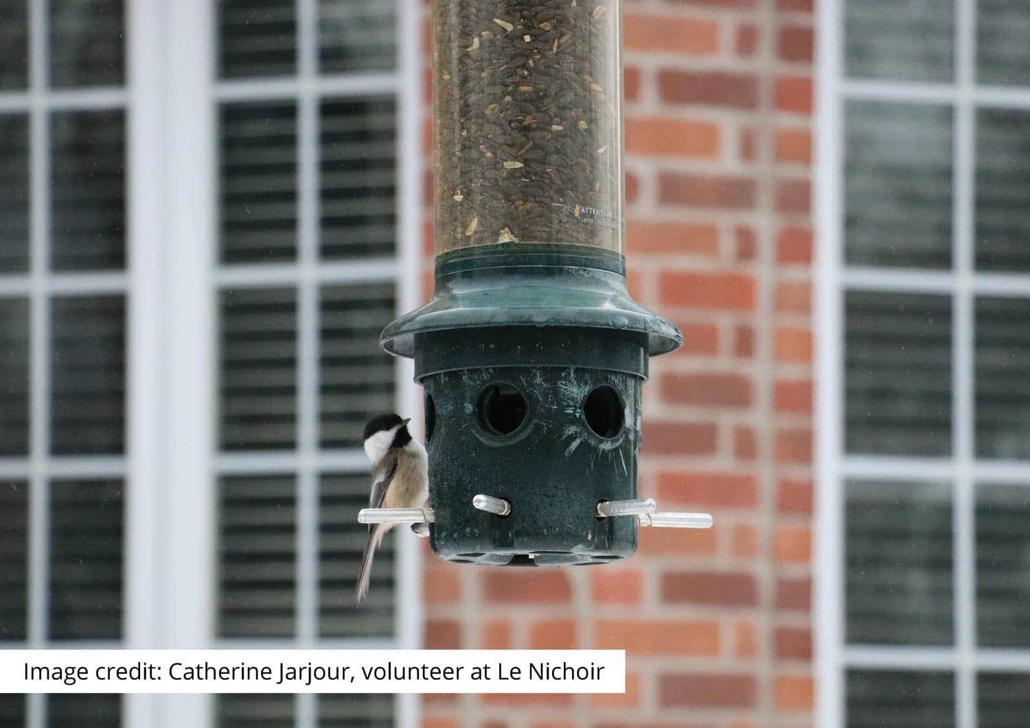 Bird-Window Collisions from a Wild Bird Rehabilitation Centre's Point of View